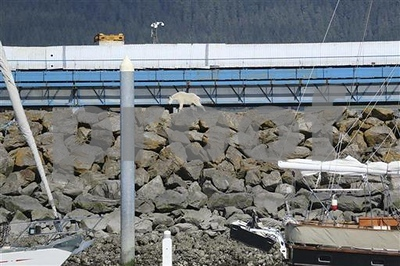 goat-drowns-trying-to-escape-alaska-crowds-taking-its-photo