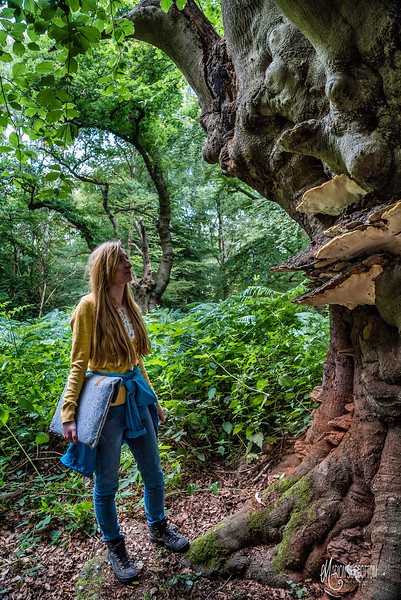 Mycologist & PhD Student Studying Beech Heart Rot