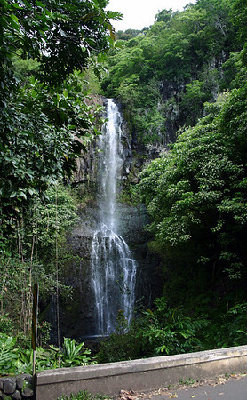 Hawaii's Rain Forests
