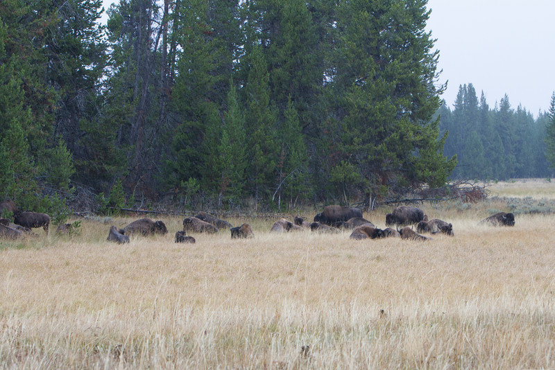 02_Yellowstone National Park_Montana_Wyoming-83.jpg