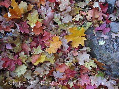 PInnacles Trail Fall 2010