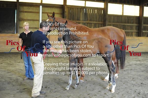 Foal entry 9