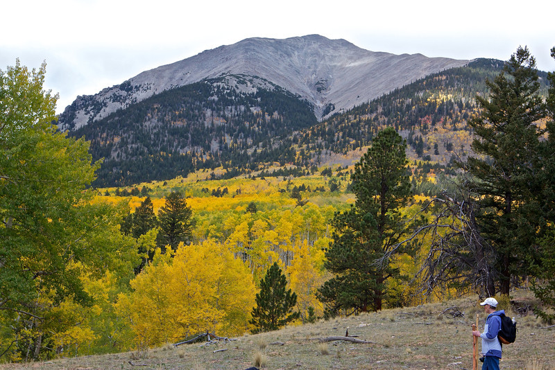 At the Aspen meadow at the base of Mount Shavano