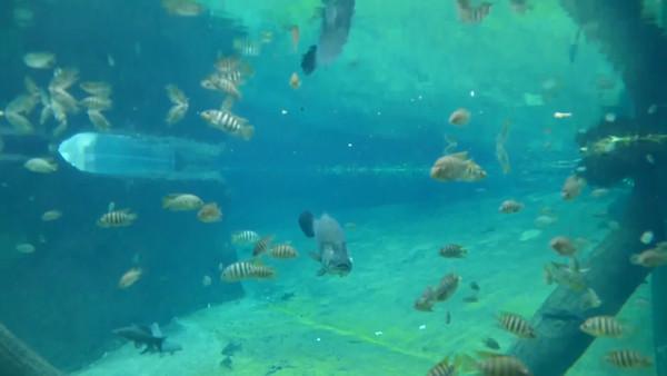 Wroclaw, Poland Aquarium