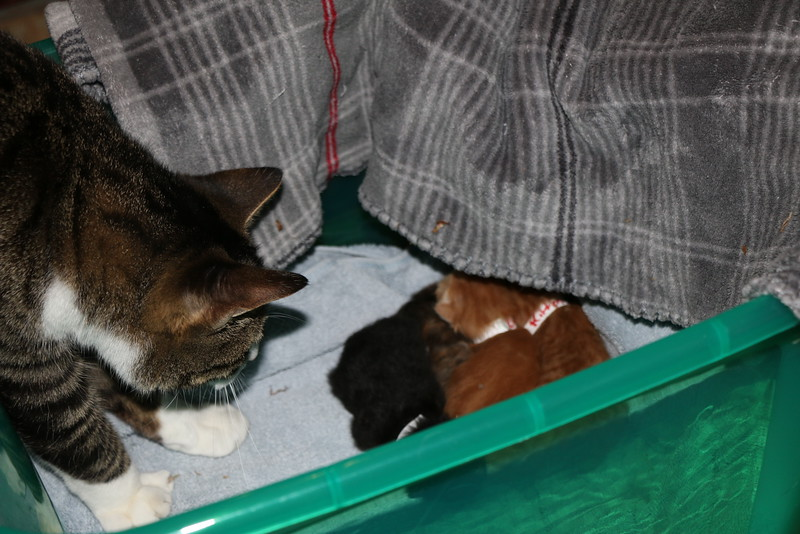 Trapping Mom and Kittens - 040115 - 2.JPG