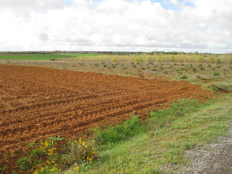 Along the Camino from Calzado de Coto to Calzadilla de los Hermanillos - Johanna Frymoyer *12