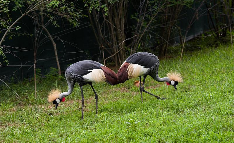 060624_0065w_Zoo.jpg