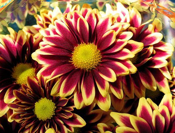 sundayflora5_15.jpg