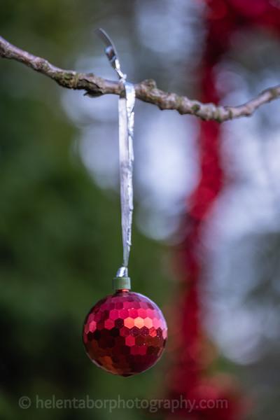Winter Wonderland daytime-58.jpg