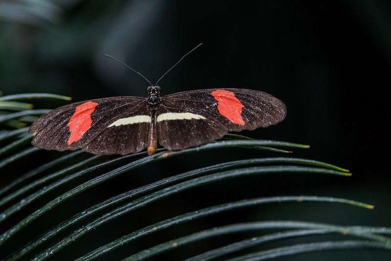 butterfly-137.jpg