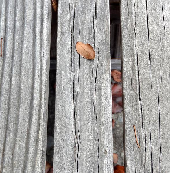 Leaf on Wood 2