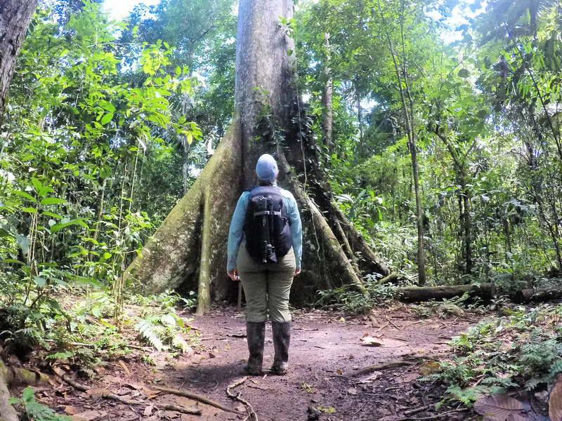 Lina Stock in the Amazon rainforest - Best camera backpack for travel