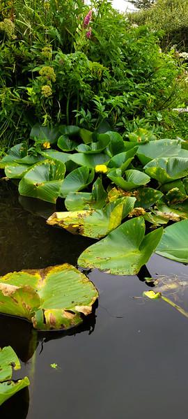 08-05-2021 Beaver Creek Kayak with Dan and Kalli-20.jpg