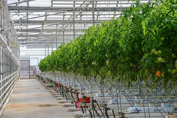 4-10-14 Paradise Hill Farm - Tomatoes & Basil