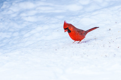 Winter Birding 2017