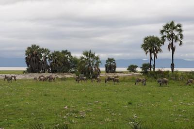 2013 Tanzania
