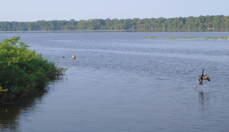 The lake is called Dead Lake but it is far from it with wildlife abound...gators, birds, manatee and countless fish