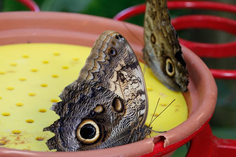 apr 1 - butterflies.jpg