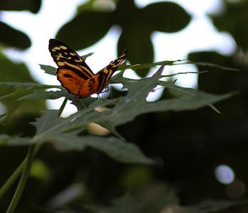 Fairchild Tropical Gardens