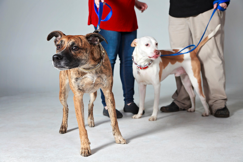 Picture Pawfect - 19 marca 2017 - 396-1.jpg