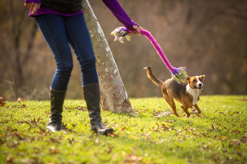 Dog Photos-Edited-25.jpg