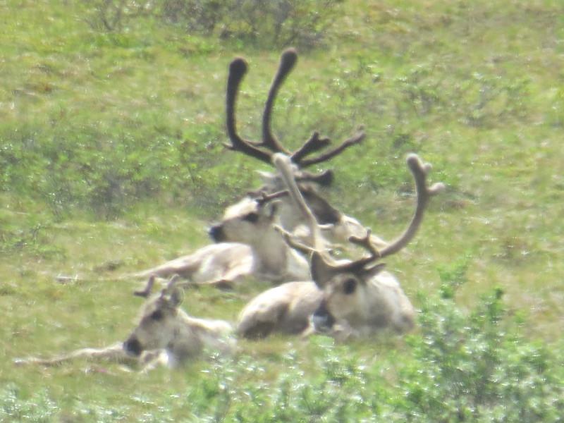 Princeton Journeys Alaska 2019 (6).JPG