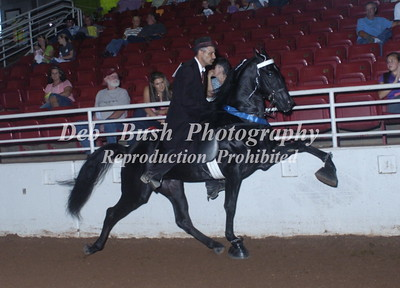 CLASS 79  AMATEUR 2 YR OLD STAKE  A/D