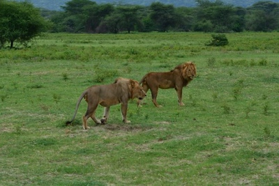 1494239968African-Safari-5.jpg