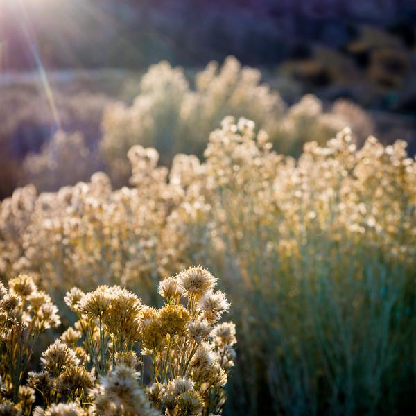 Weeds of Glory