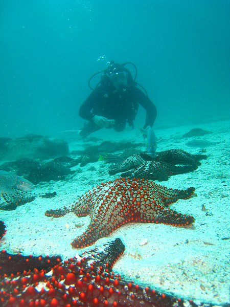 Diving in the Galapagos (148 of 392)