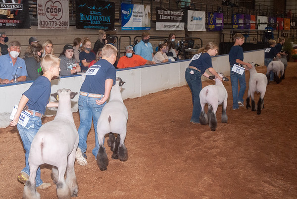 American Royal Lamb Showmanship