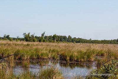 Natuurgebied Mariapeel Limburg