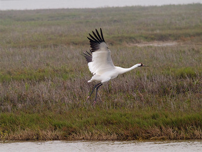 Birds with Protected Lands