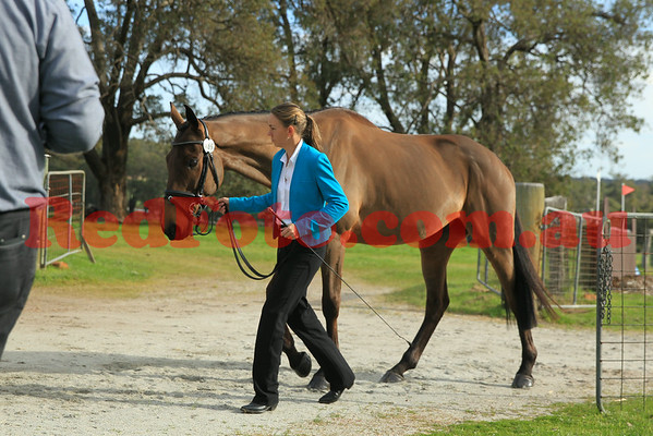 Horse Inspection Trotups