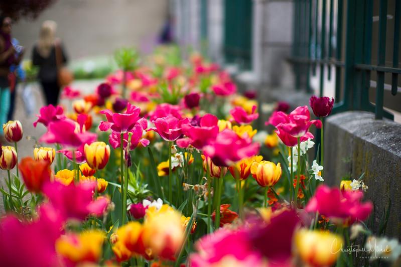 May092013_Marc Meneau L'Espérance_clos vougeot_7410.jpg