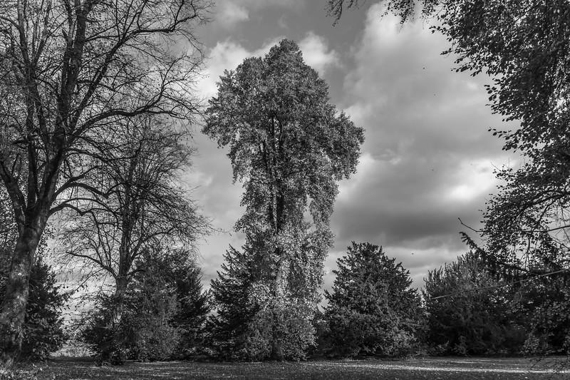 2016-11-05 Westonbirt R111-2-298.jpg
