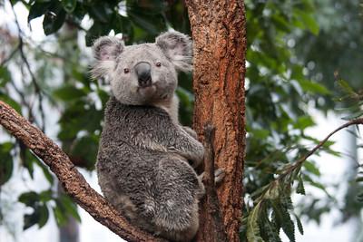 Australia Zoos