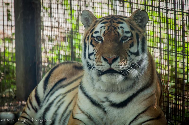 zoo_july_2012-14.jpg