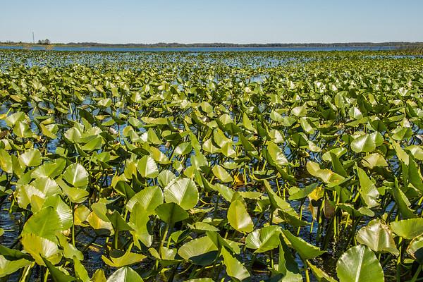 Lake Istokpoga/ Sebring