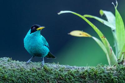 Small birds of Costa Rica