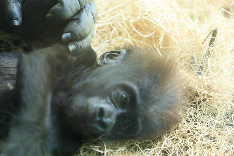 2015_08_20 Kansas City Zoo 055.jpg