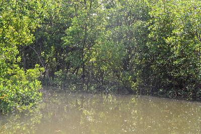 9AM Mangrove Tunnel Kayak Tour - Black & Olson