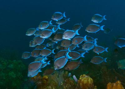 Belize (Underwatere)