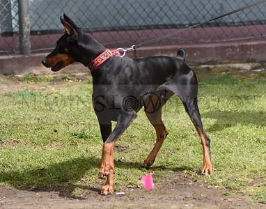 3-3-18 Dog 14