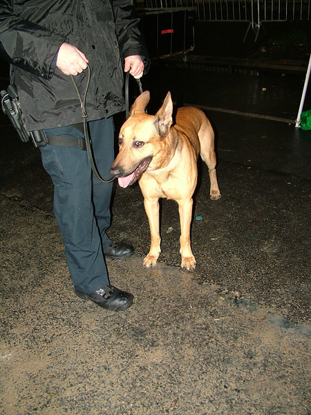 One of the many police dogs on patrol.