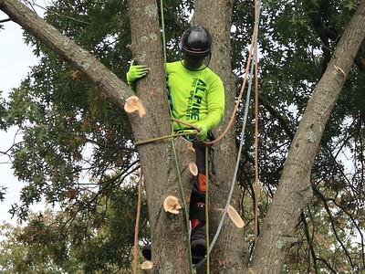 Alpine Tree Specialists