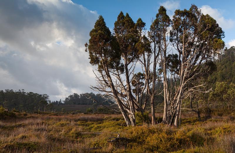 Tasmania_2015_102.jpg
