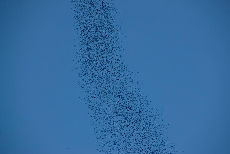 Closer shot of the bat swarm above Mulu National Park - Sarawak Malaysia
