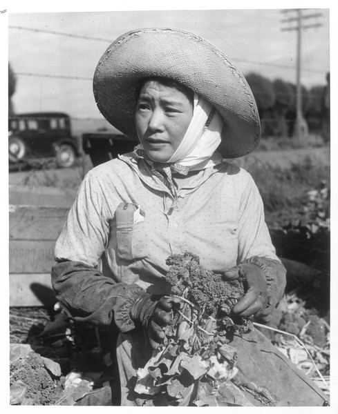 """""""Japanese housewife bunching vegetables for the final time in a field of the Lower Santa Maria Valley.""""--caption on photograph"""