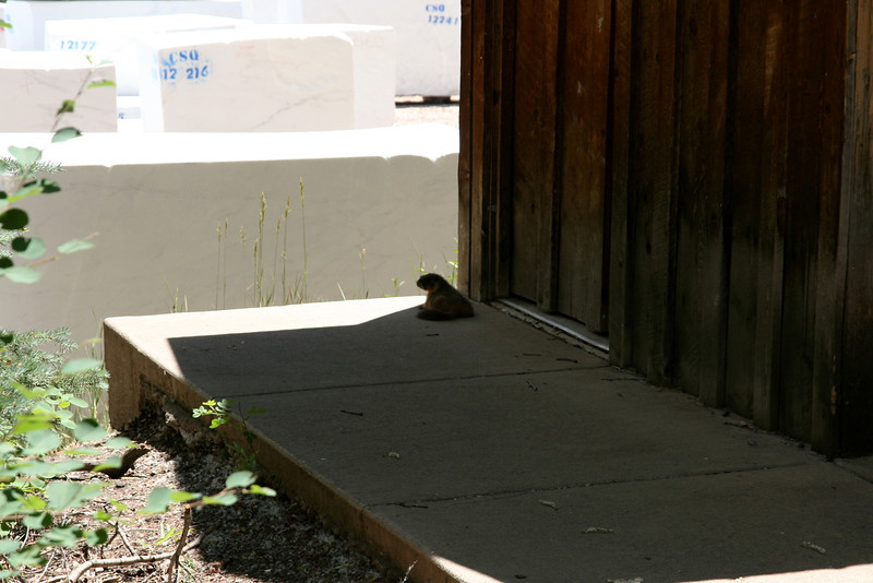 Guarding the loo!